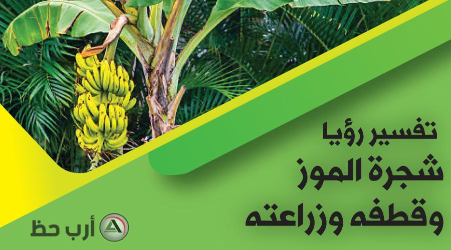 الموز في المنام تفسير رؤيته وأكله وقطفه واعطائه في الحلم تغطية شاملة ارب حظ