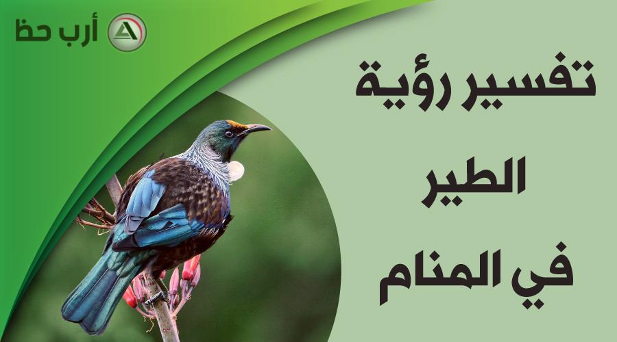 حلم الطير تفسير رؤية الطيور في المنام على اختلاف أشكالها و أنواعها ارب حظ
