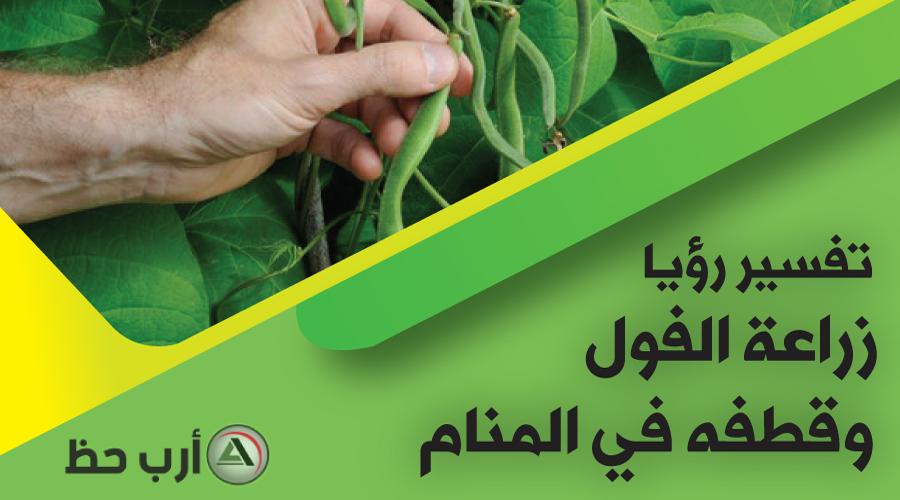 حلم  زراعة الفول وحصاده وقطفه وجمعه