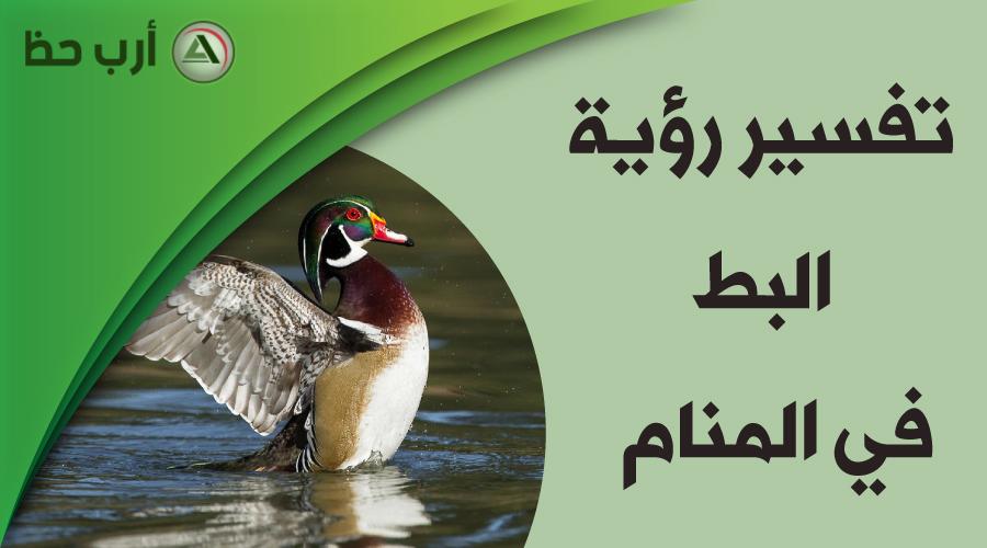 تفسير رؤية البط في المنام الشرح التفصيلي للحلم ارب حظ