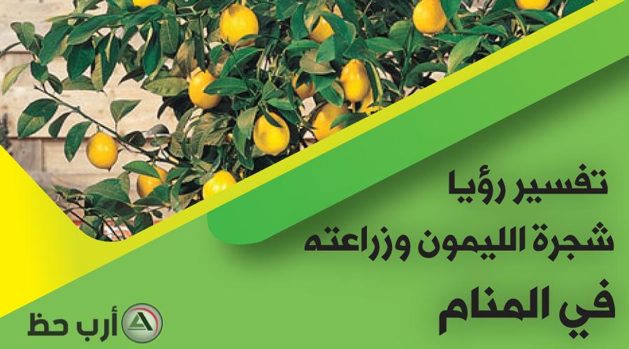 رؤية شجرة الليمون وزراعة الليمون