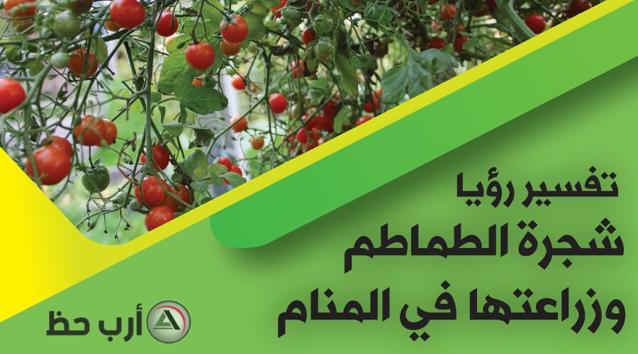 تفسير حلم شجرة الطماطم