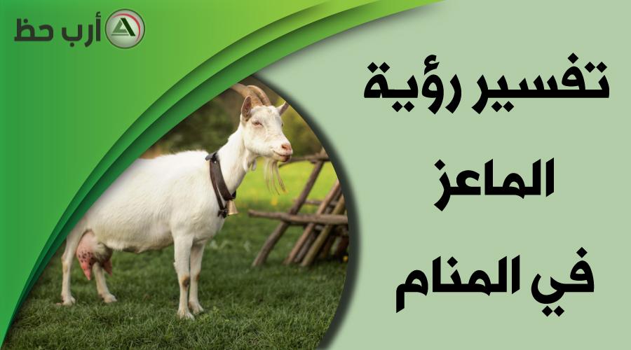 تفسير حلم الماعز كل ما ترغب بمعرفته عن رؤية الماعز في المنام ارب حظ