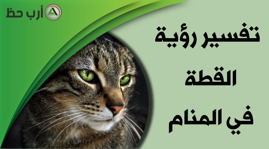 تفسير حلم القطة التفسير الدقيق لرؤية القطة في المنام ارب حظ