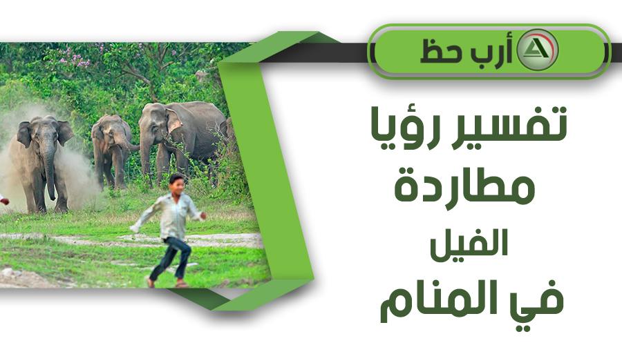 تفسير حلم مطاردة الفيل
