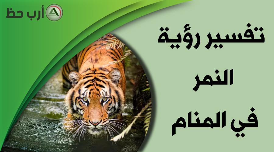 تفسير رؤية النمر في المنام كل شيء عن حلم النمر ارب حظ