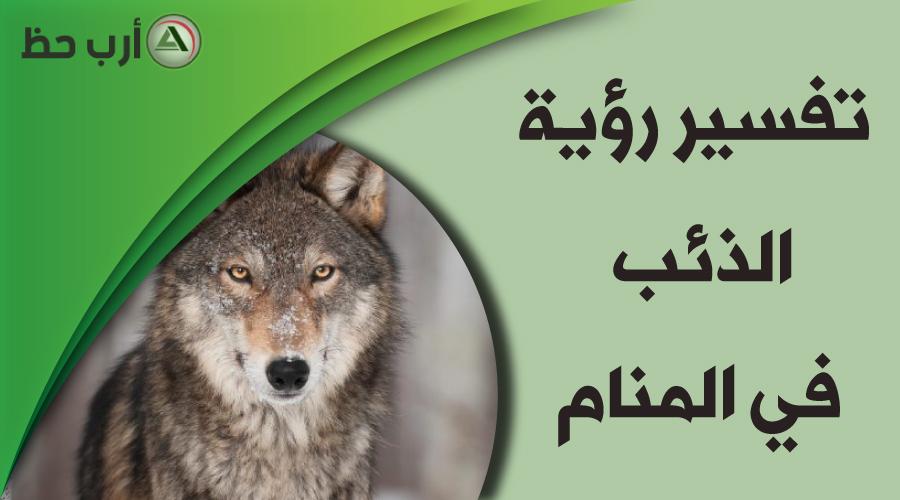 رؤية الذئب في المنام وهل حلم الذئب مبشر بالخير ارب حظ