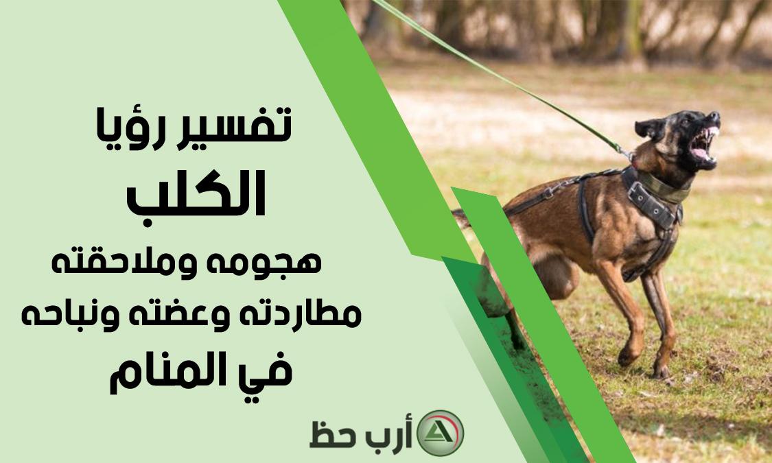 تفسير حلم الكلب معنى هجوم ملاحقة مطاردة عضة نباح الكلب في المنام ارب حظ