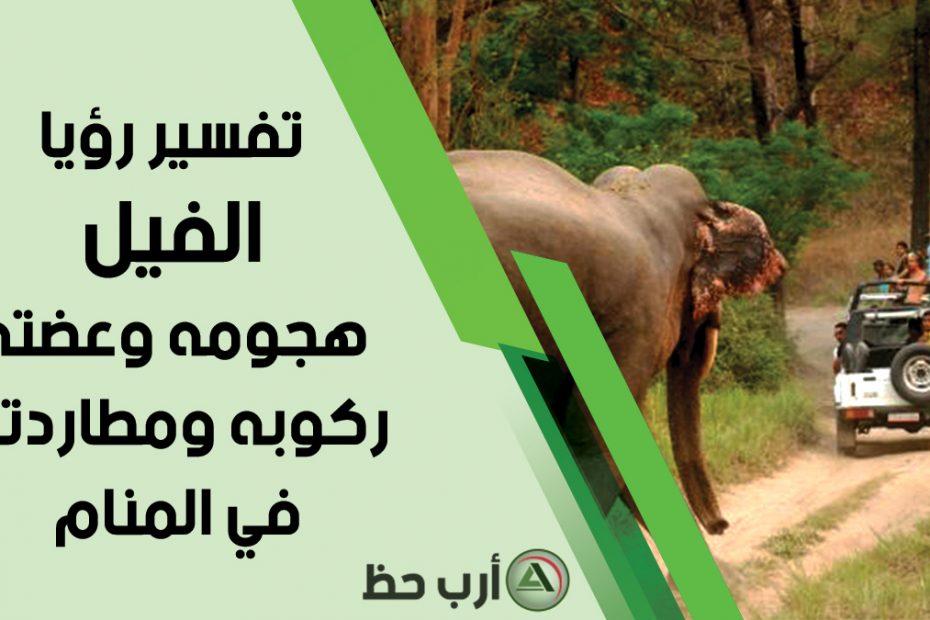 تفسير حلم ركوب الفيل