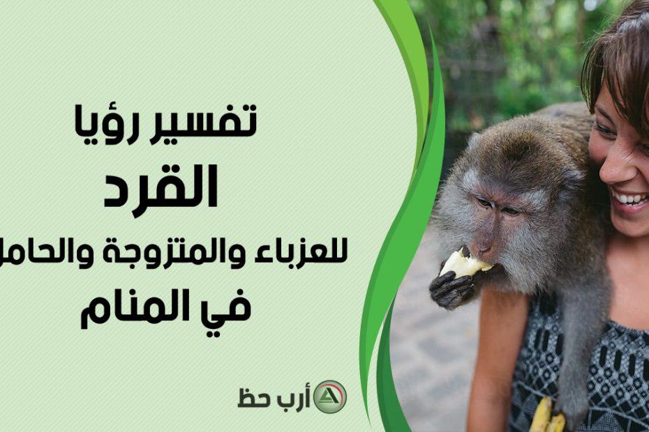 تفسير حلم القرد للعزباء والمتزوجة