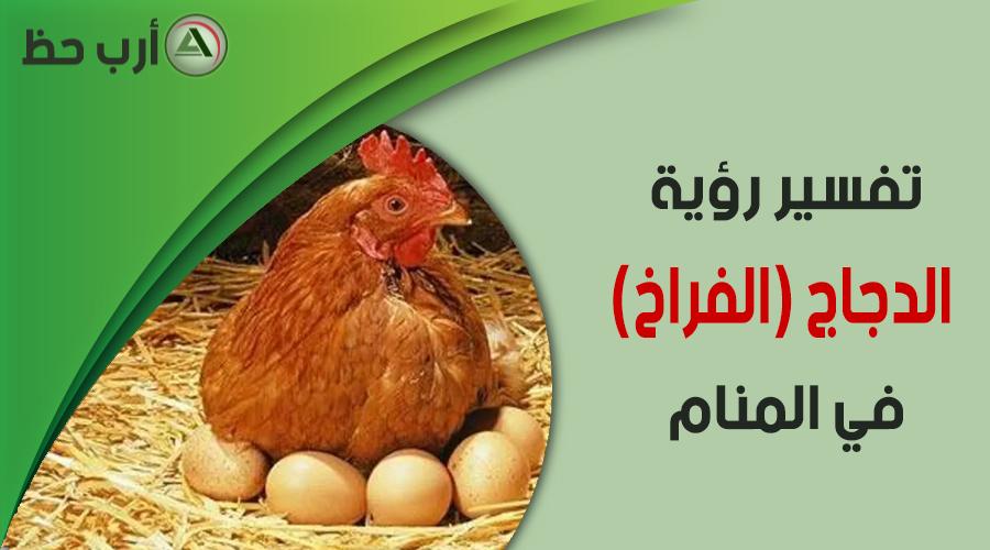 تفسير حلم الدجاج والفراخ