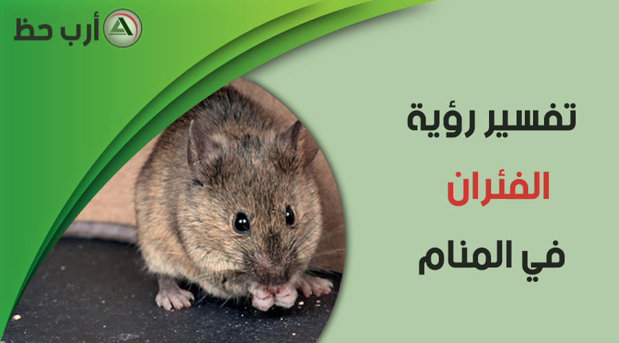 تفسير حلم الفئران