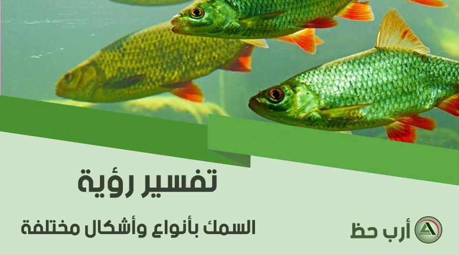 رؤية السمك  حسب الشكل