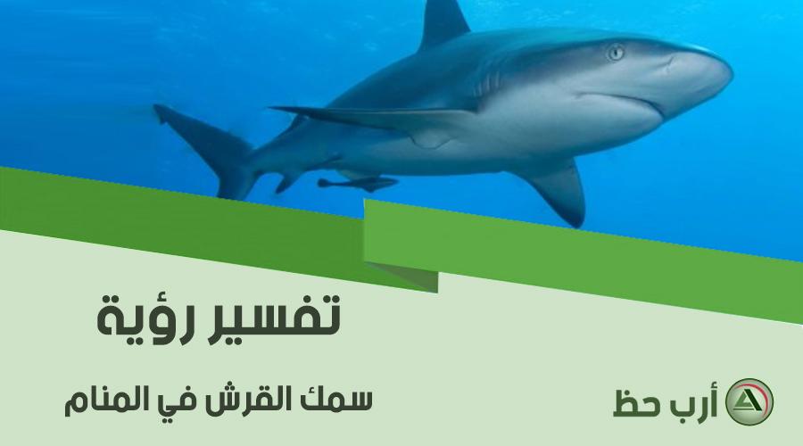 حلم سمك القرش